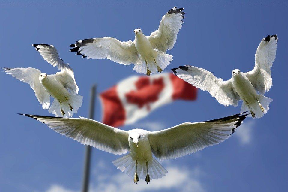 تحصیل در کانادا و مزیت های اقامتی