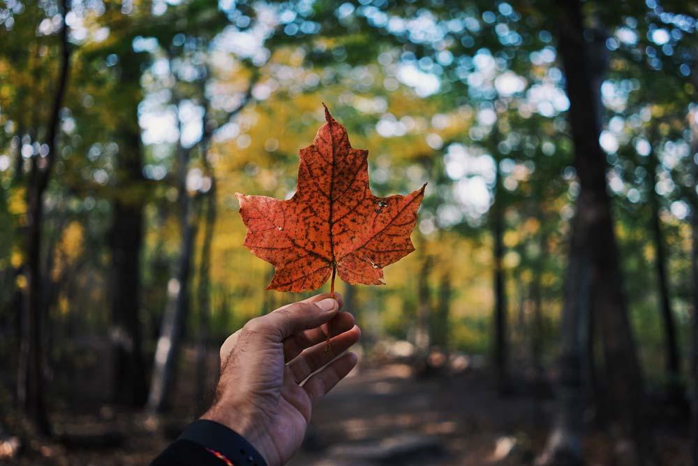 نمادهای ملی کانادا